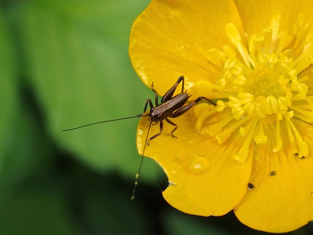 Insecte Vallée Aspe