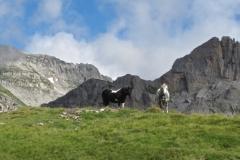 Paturage Vallée Aspe