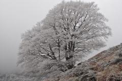 hiver vallée aspe